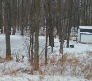 Pond lake river maintenance tips